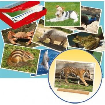 Fotos animales